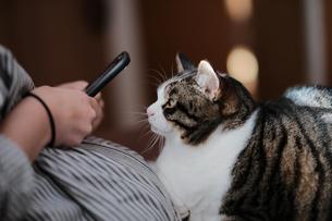 スマホと猫の写真素材 [FYI04737437]