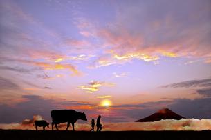 オレンジの空を背景に草原の牧場で牛を曳く老人と少女のシルエットの写真素材 [FYI04737448]