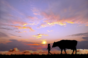 オレンジの空を背景に草原の牧場で牛を曳く少女のシルエットの写真素材 [FYI04737449]