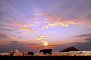 富士山とオレンジの空を背景に高原の牧場で草を食む複数の牛のシルエットの写真素材 [FYI04737454]