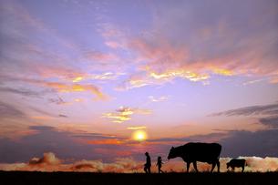 オレンジの空を背景に草原の牧場で牛を曳く老人と少女のシルエットの写真素材 [FYI04737459]