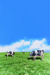 青空背景に丘陵の牧場で草を食む数頭の牛の写真素材 [FYI04737596]