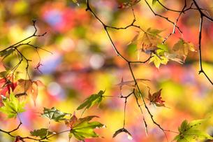 日本の秋の風景の写真素材 [FYI04737605]