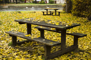 ベンチと落葉絨毯の写真素材 [FYI04737994]