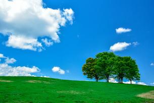 青空と樹木のイメージの写真素材 [FYI04738132]
