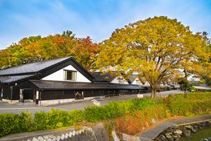 山居倉庫の秋の写真素材 [FYI04738467]