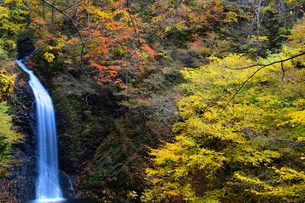 大仙の滝 ~秋~の写真素材 [FYI04738488]