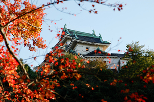 和歌山城の写真素材 [FYI04738645]