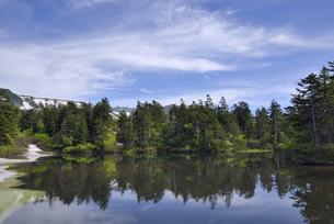 夏の大雪高原沼(北海道・大雪山)の写真素材 [FYI04738745]