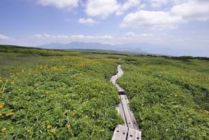 夏の五色ケ原(北海道・大雪山)の写真素材 [FYI04738766]