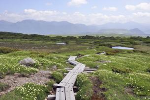 夏の五色ケ原(北海道・大雪山)の写真素材 [FYI04738767]