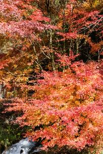 紅葉の風景の写真素材 [FYI04738875]