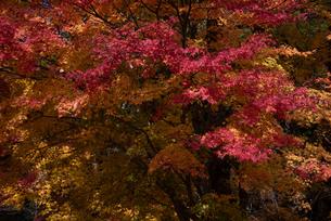 紅葉の風景の写真素材 [FYI04738882]