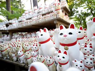 東京都 豪徳寺の招き猫の写真素材 [FYI04738896]