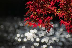 池ともみじの写真素材 [FYI04739218]