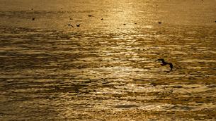 カモメが舞飛ぶ夕日の光にキラキラ光る海面のクローズアップ写真の写真素材 [FYI04739338]