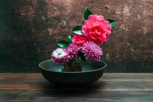 和風に活けた山茶花と菊の花の写真素材 [FYI04739349]