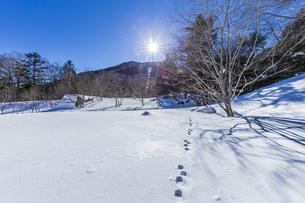 奥日光湯元の雪原風景に残る獣の足跡と暖かな太陽の陽射の写真素材 [FYI04739370]