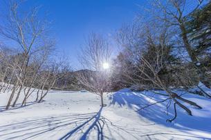 奥日光湯元の雪原風景に残る獣の足跡と暖かな太陽の陽射の写真素材 [FYI04739372]