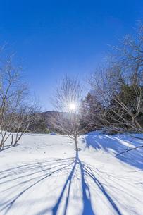 奥日光湯元の雪原風景に残る獣の足跡と暖かな太陽の陽射の写真素材 [FYI04739374]