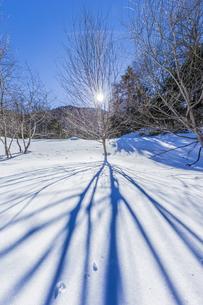 奥日光湯元の雪原風景に残る獣の足跡と暖かな太陽の陽射の写真素材 [FYI04739375]