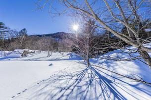 奥日光湯元の雪原風景に残る獣の足跡と暖かな太陽の陽射の写真素材 [FYI04739385]