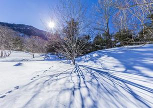 奥日光湯元の雪原風景に残る獣の足跡と暖かな太陽の陽射の写真素材 [FYI04739387]