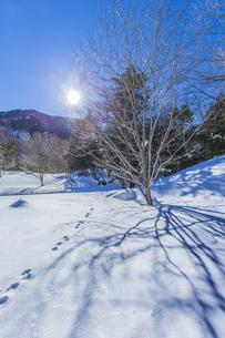 奥日光湯元の雪原風景に残る獣の足跡と暖かな太陽の陽射の写真素材 [FYI04739388]