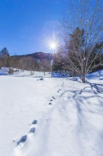 奥日光湯元の雪原風景に残る獣の足跡と暖かな太陽の陽射の写真素材 [FYI04739389]