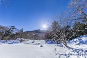 奥日光湯元の雪原風景に残る獣の足跡と暖かな太陽の陽射の写真素材 [FYI04739394]