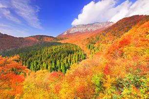 秋の鍵掛峠より大山と紅葉の写真素材 [FYI04739588]