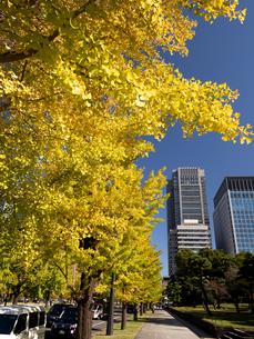 東京都 丸の内オフィスビル街とイチョウ並木 の写真素材 [FYI04740102]