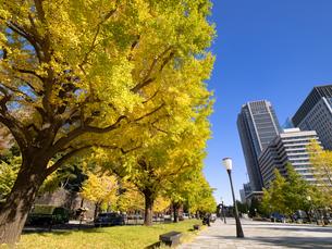東京都 丸の内オフィスビル街とイチョウ並木 の写真素材 [FYI04740103]