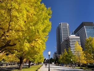 東京都 丸の内オフィスビル街とイチョウ並木 の写真素材 [FYI04740104]