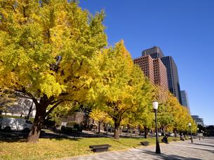 東京都 丸の内オフィスビル街とイチョウ並木 の写真素材 [FYI04740105]
