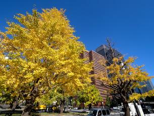 東京都 丸の内オフィスビル街とイチョウ並木 の写真素材 [FYI04740107]