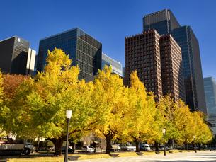 東京都 丸の内オフィスビル街とイチョウ並木 の写真素材 [FYI04740108]