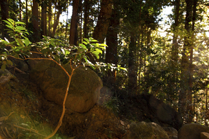 木の写真素材 [FYI04740317]