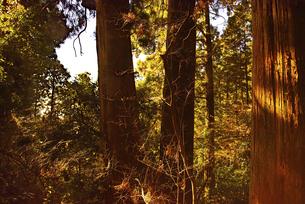 木の写真素材 [FYI04740326]