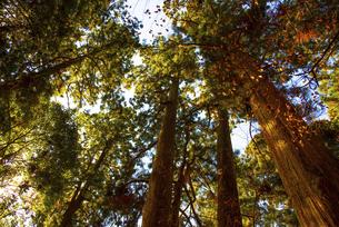 木を見上げた風景の写真素材 [FYI04740327]