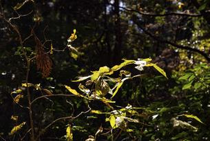 植物の写真素材 [FYI04740329]