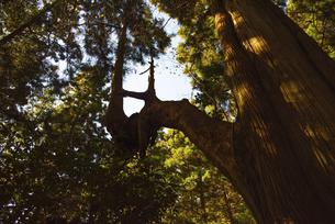 木の写真素材 [FYI04740333]