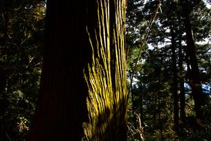 木の写真素材 [FYI04740334]