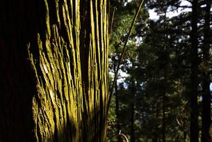 木の幹の写真素材 [FYI04740335]