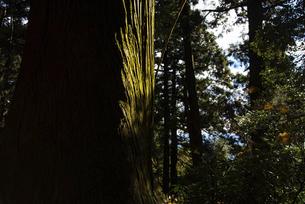 木の幹の写真素材 [FYI04740336]