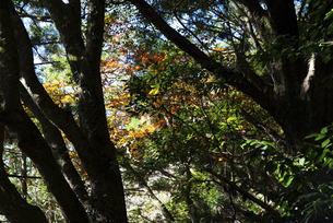 紅葉の風景の写真素材 [FYI04740339]