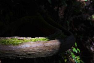 木の根っこの写真素材 [FYI04740340]