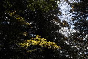 木の写真素材 [FYI04740344]