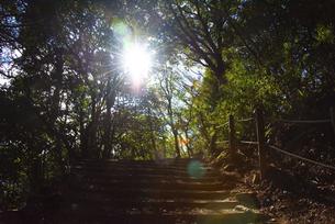 筑波山の登山道の写真素材 [FYI04740345]