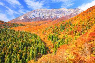 秋の鍵掛峠より大山と紅葉の写真素材 [FYI04740596]
